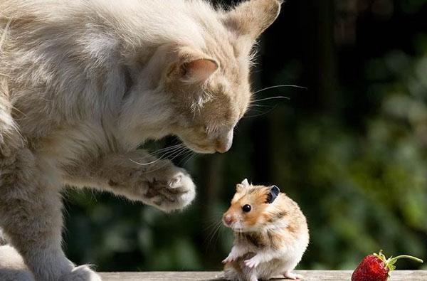 кот против мышей