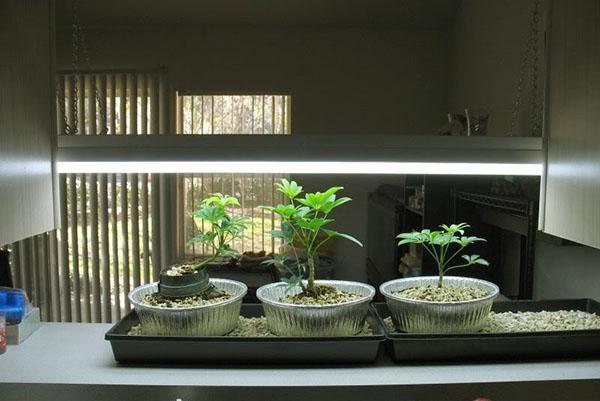 уход за молодыми растениями