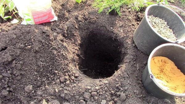 яма для посадки можжевельника