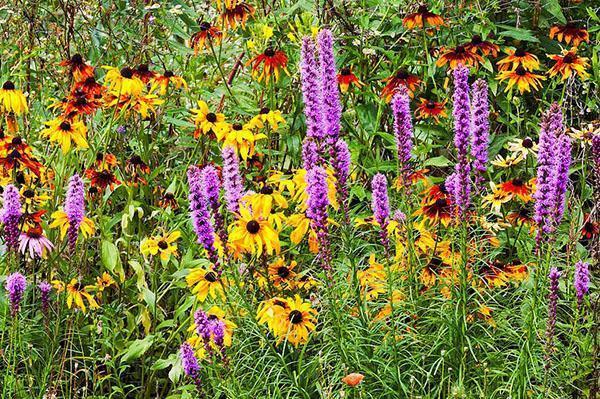 августовское благоухание цветника