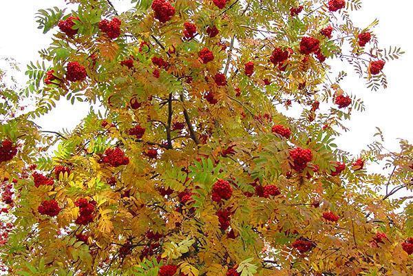 нарядная листва в осеннюю пору