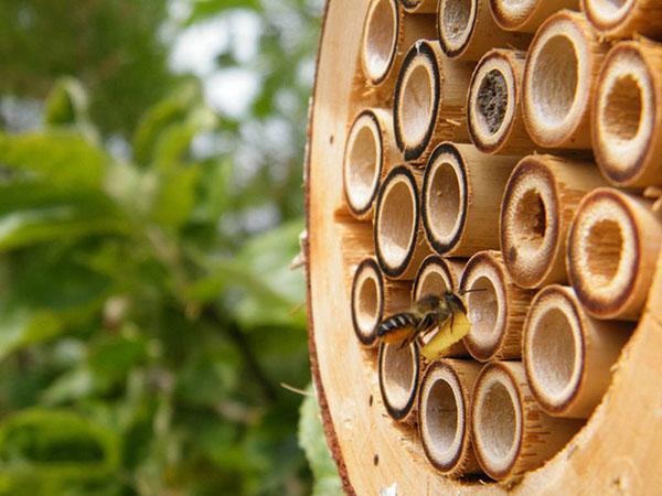 прилетела пчела в отель
