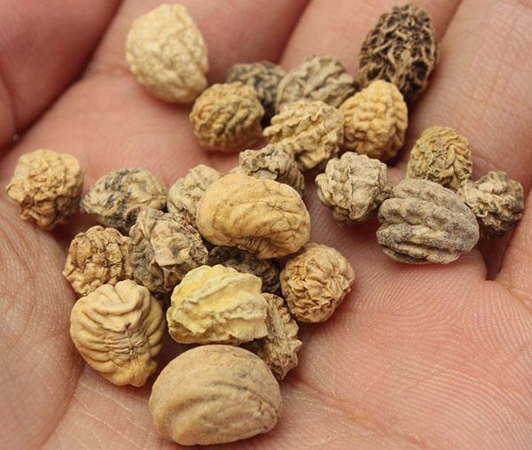 семена настурции для посева
