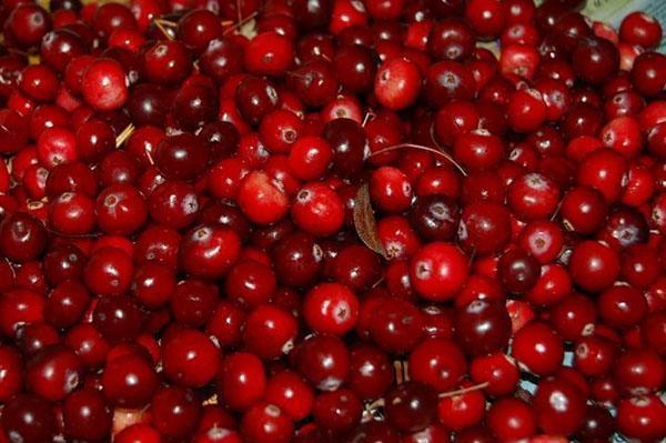 свежие ягоды клюквы