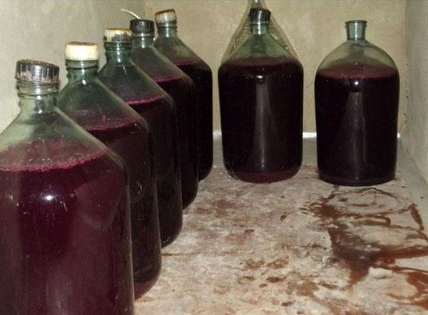Рецепты вино из ежевики в домашних условиях 775