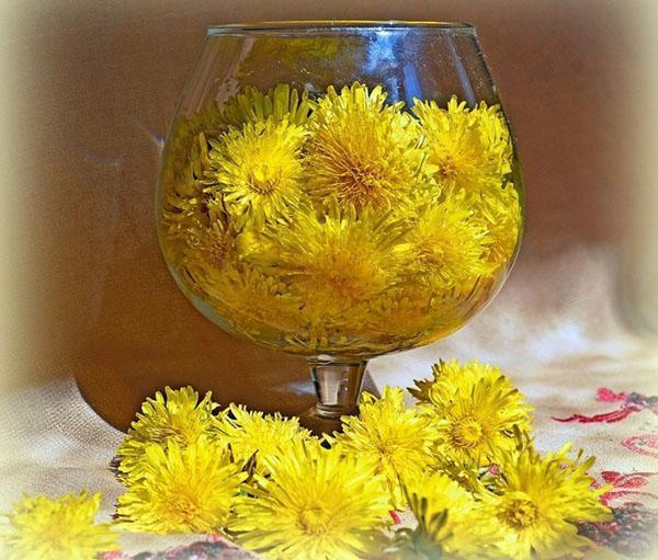 цветы одуванчиков для приготовления настойки