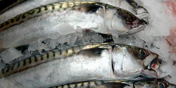 хорошего качества замороженная рыба