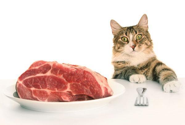 Еда для кошки