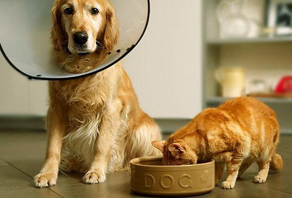 лечебный корм для собаки