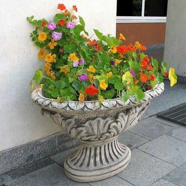 настурция в напольной вазе