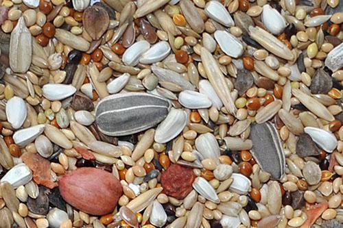 орехи и семечки в корме для попугайчиков