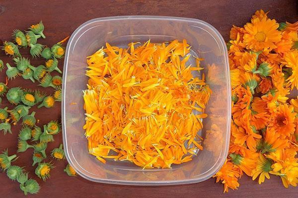 подготовка цветов для приготовления мази