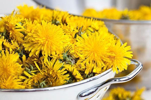 подготовка цветов одуванчика