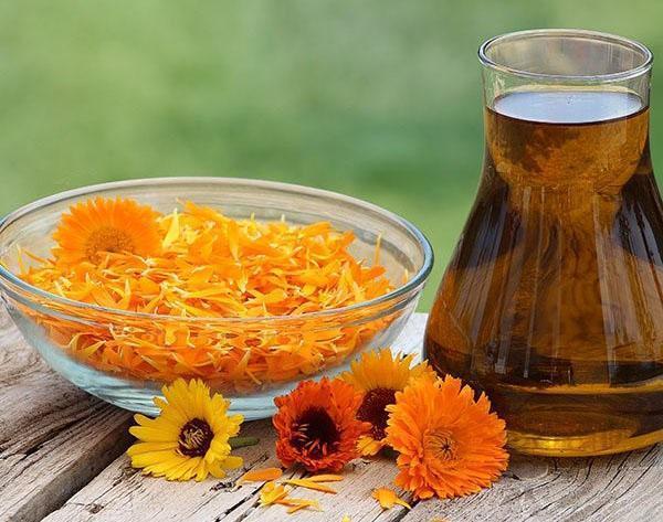 приготовление масла календулы в домашних условиях
