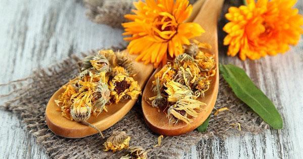 сушеные цветы календулы