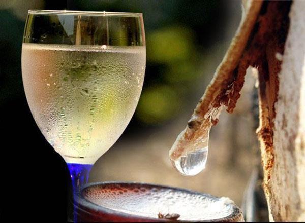 вино из березового сока готово к употреблению