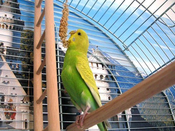витаминные палочки для попугаев