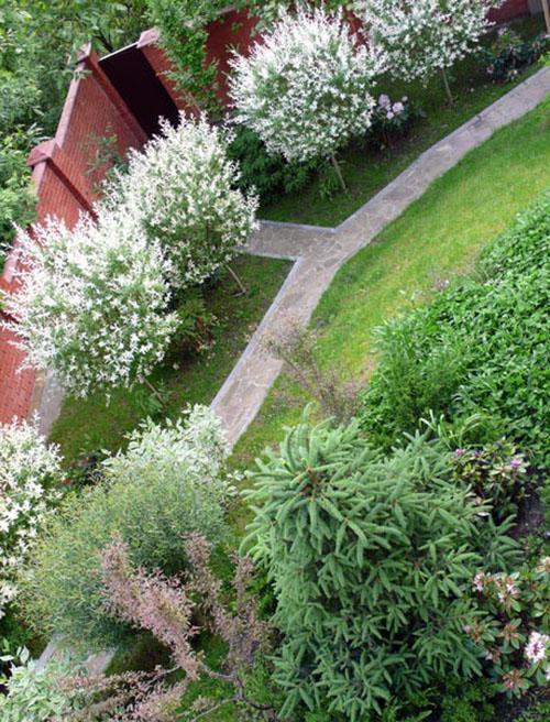 Ива хакуро нишики в ландшафтном дизайне