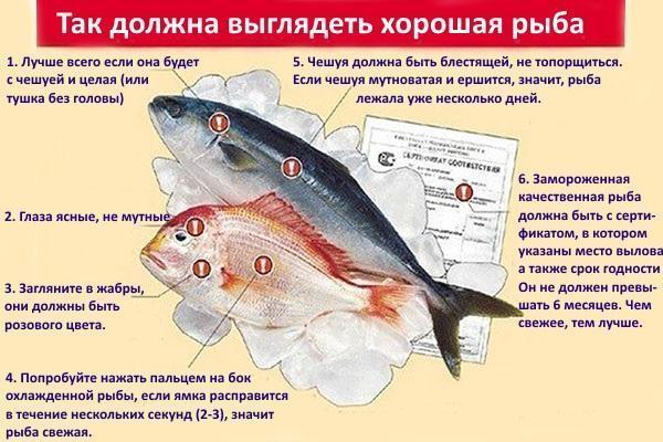 правила отбора рыбы для засолки