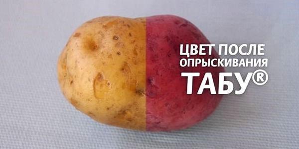 картофель до и после обработки