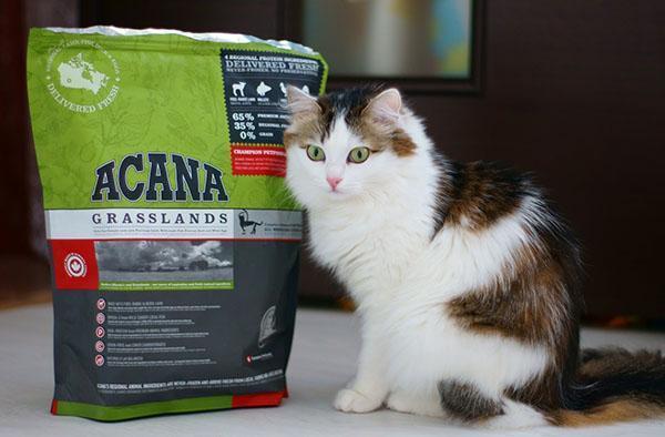 любимый корм кошек