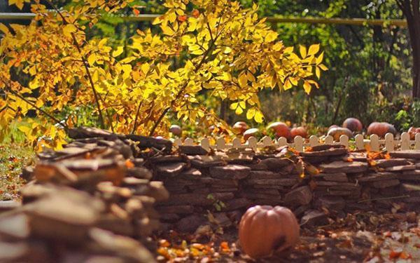 осень на дачном огоноде