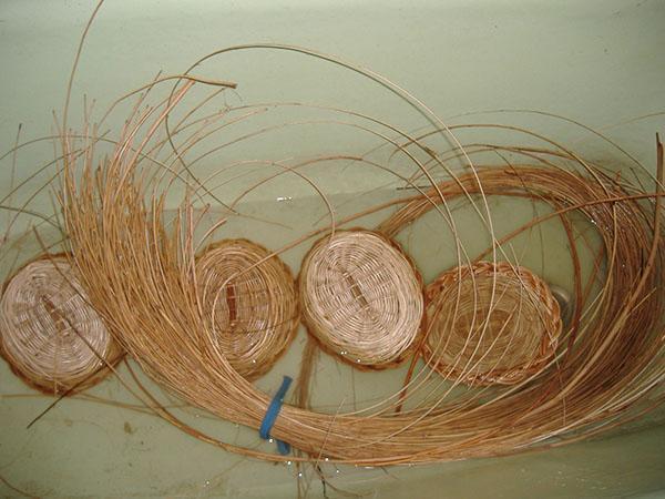 прутья ивы для плетения корзин