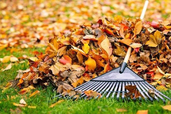 уборка листвы в октябре