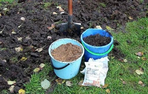 удобрения для кустарников
