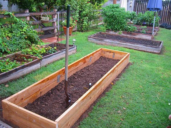 улучшаем состав почвы