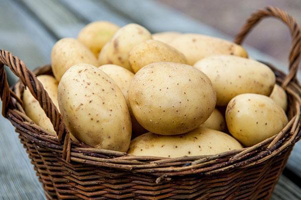 урожай картофеля после обработки престижем