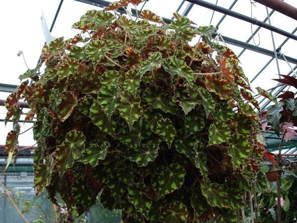 smukke brune blad billeder