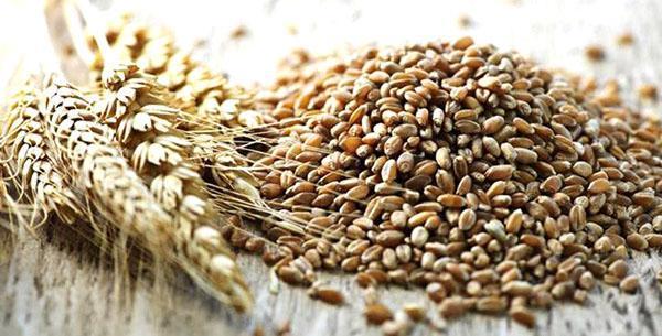 пшеница для приготовления каши