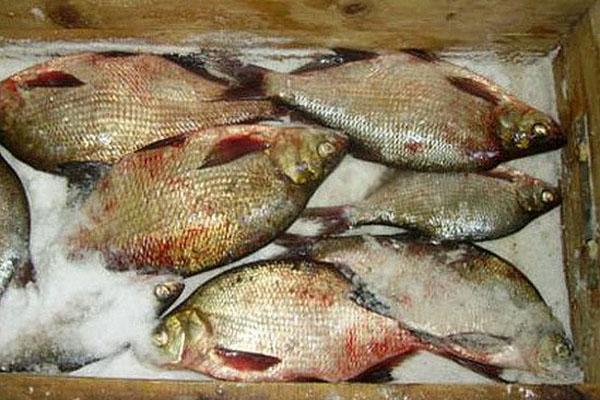 пересыпать рыбу солью и поставить гнет
