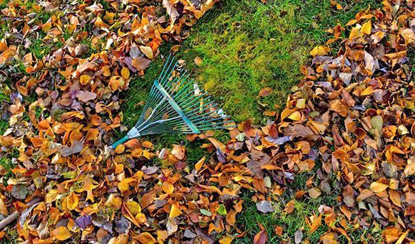уборка листвы и веток в саду