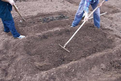 осеннее удобрение почвы