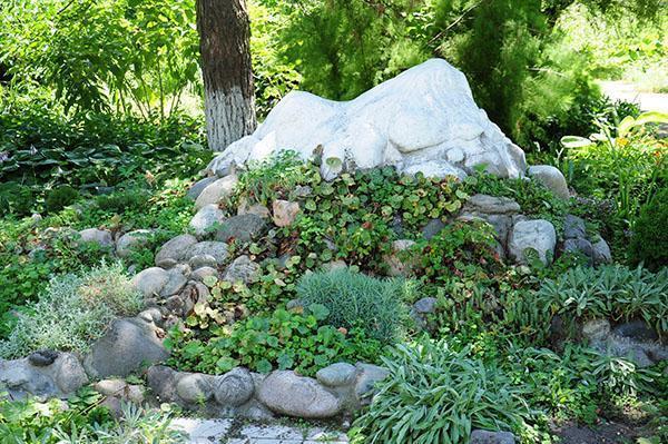 прекрасное сочетание камней и растений