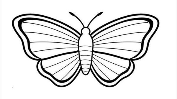 красивая полосатая бабочка