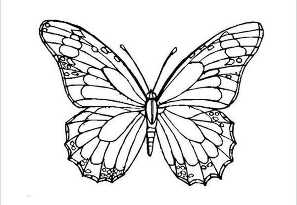 бабочка для апликации