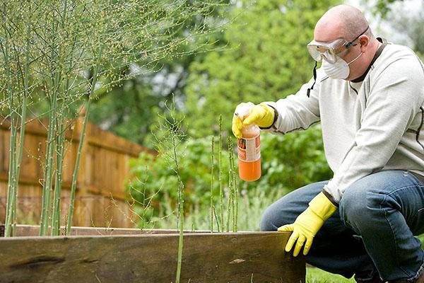 работа с инсектицидом в средствах личной защиты