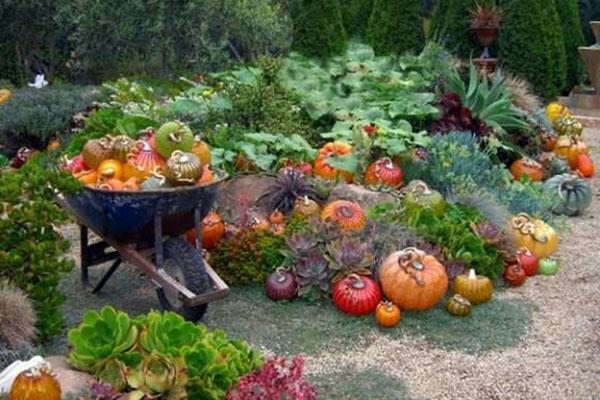 урожайность при правильном соседстве
