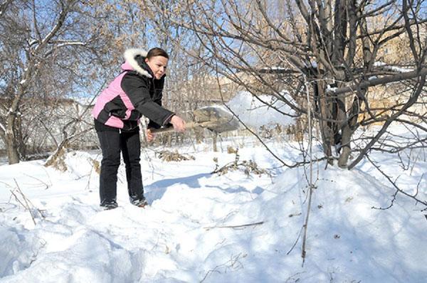 укрываем снегом приствольный круг
