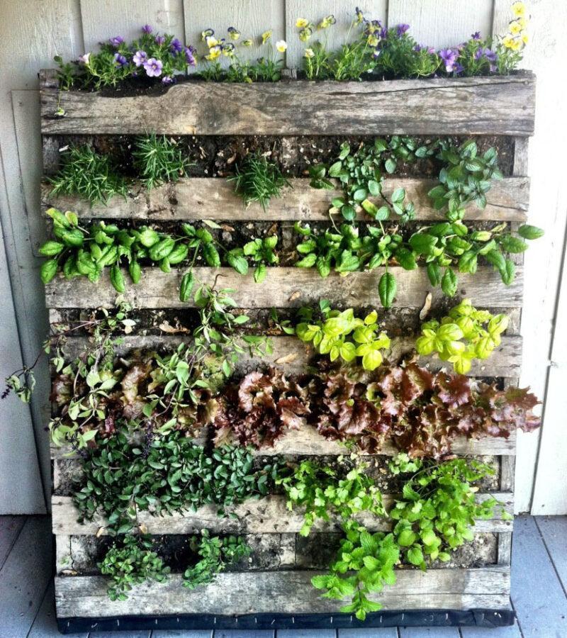 живая стена на кухне из пряных трав