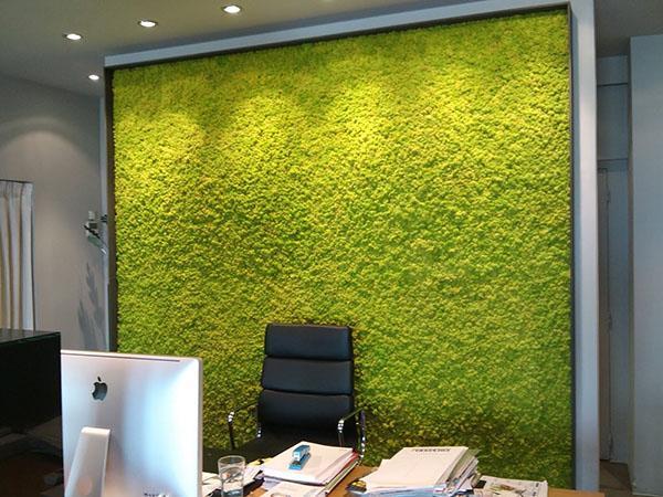 стена в кабинете из настоящего мха