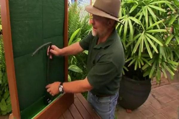 создание небольшой стены из живых растений