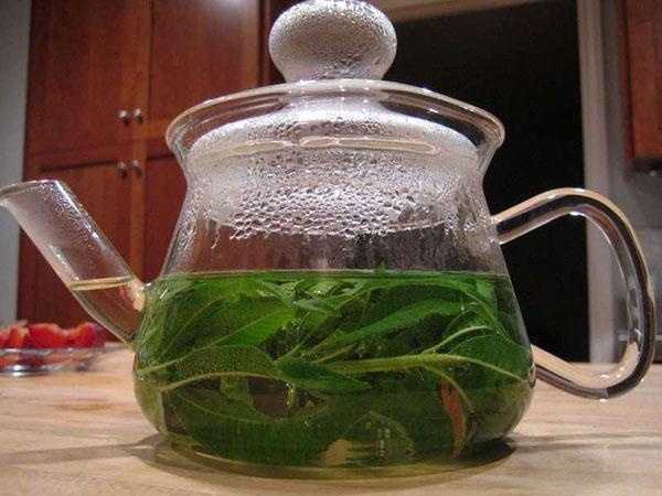 чай из лекарственной вербены