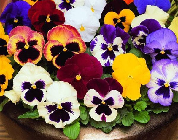 цветы разного окраса