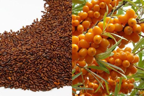 плоды и семечки облепихи