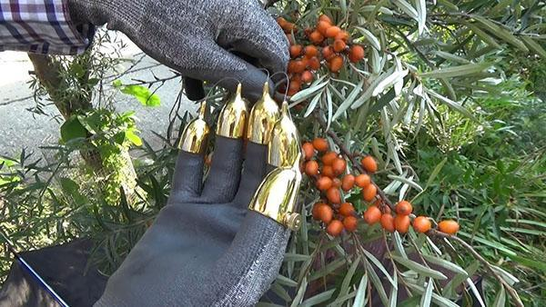 рукавицы для сбора облепихи