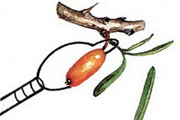 кобра для сбора ягод